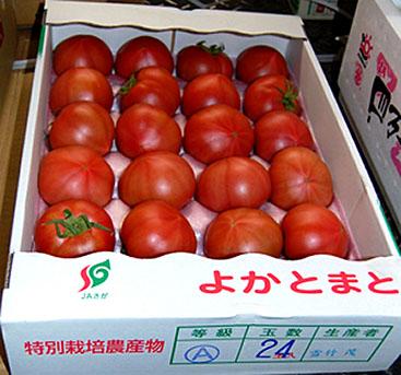 特別栽培農産物A等級の高品質の佐賀産「よかとまと」